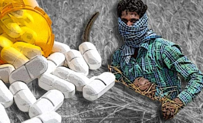bonded laborers being given drugs by punjab farms