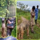 tamil nadu pic of elephant baby hugging the forest officer after reuniting with mother goes viral